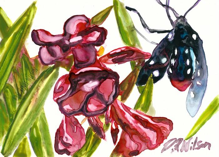 Oleander Moth Study