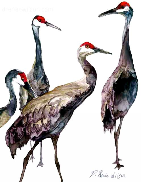 Florida Sandhill Cranes; Noble Guardians